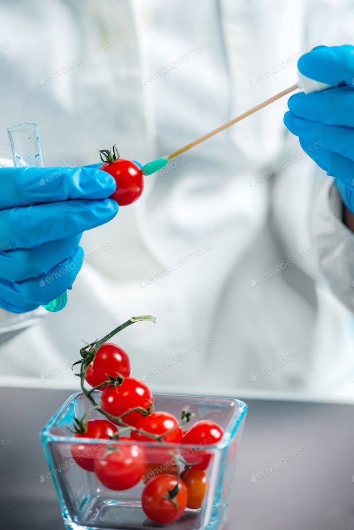 Biologist analyzing cherry tomato for pesticides