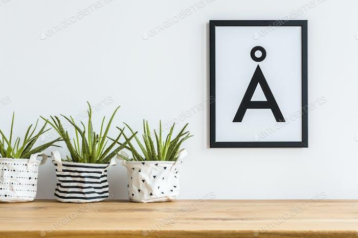 Aloe in fabric planters