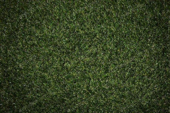 Draufsicht auf Feld mit grünem Gras