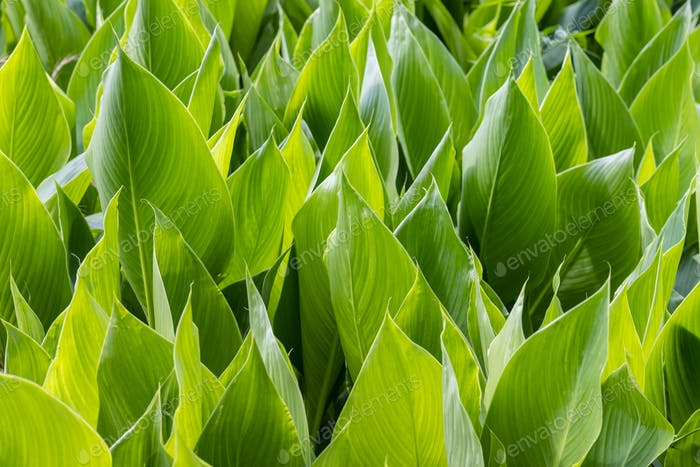 bright green leaves background