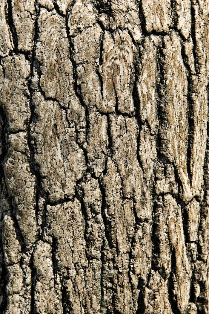 Close-up of tree bark