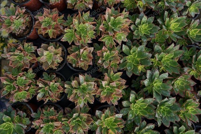 Arrangement of succulents