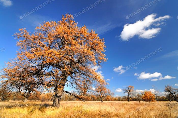 Beautiful autumn landscape large deciduous tree