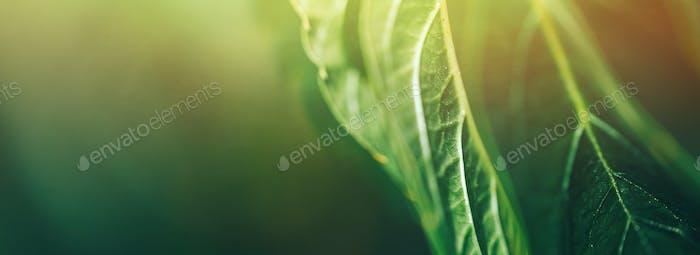 autumn Grape leaf on grapevine, close-up. macro photo selected focus