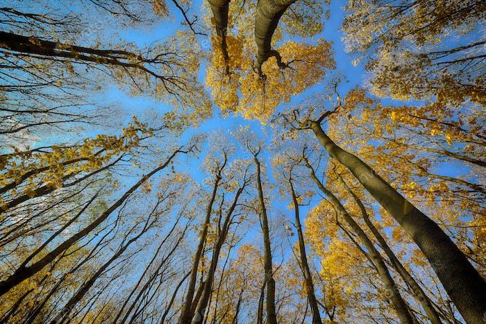 Árboles de otoño coloridos en el Bosque