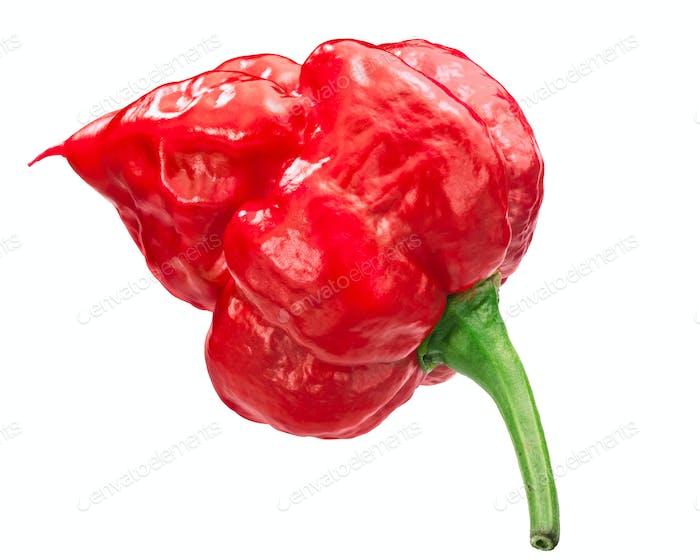 Trinidad scorpion pepper c. chinense, paths