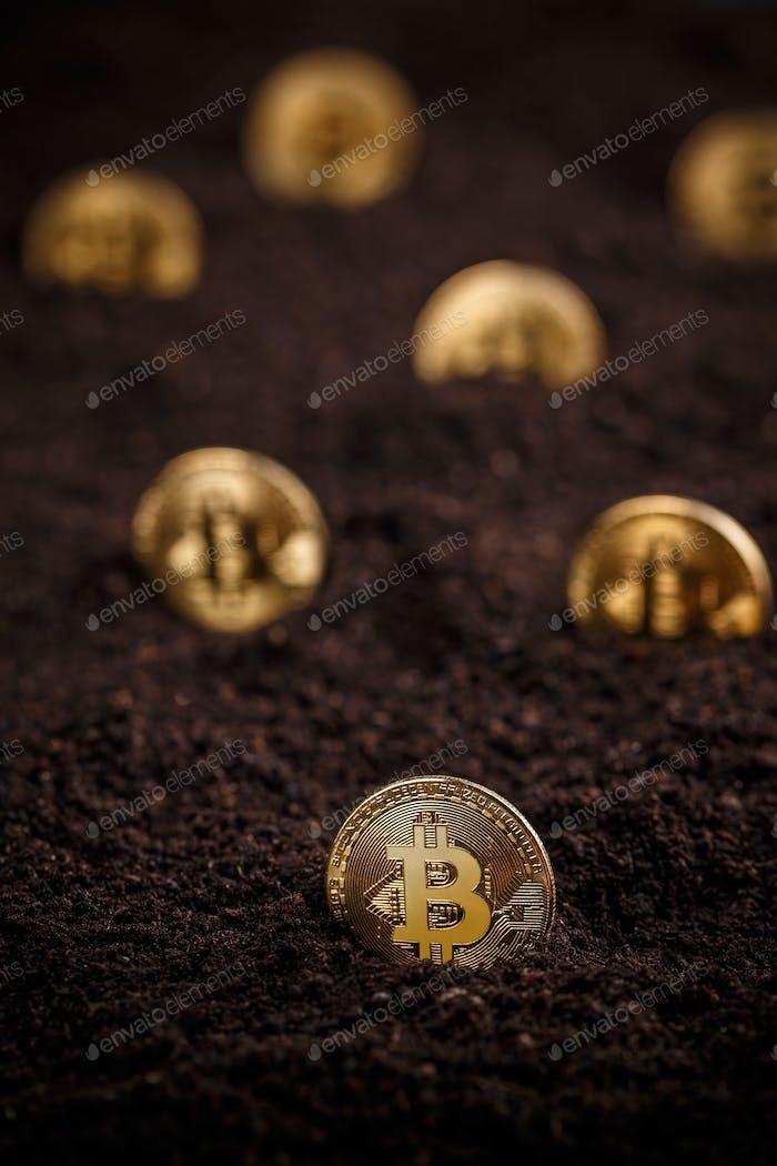 Golden bitcoin hidden