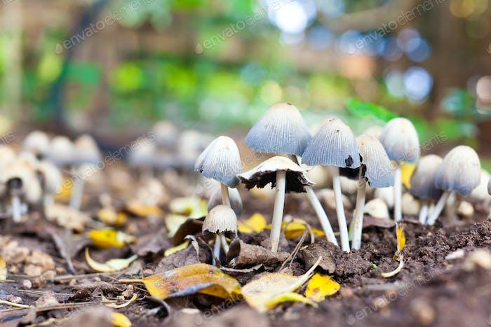 Growing Mushrooms 2