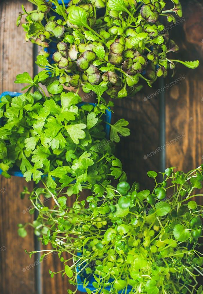 Homegrown radish kress, water kress and coriander sprouts