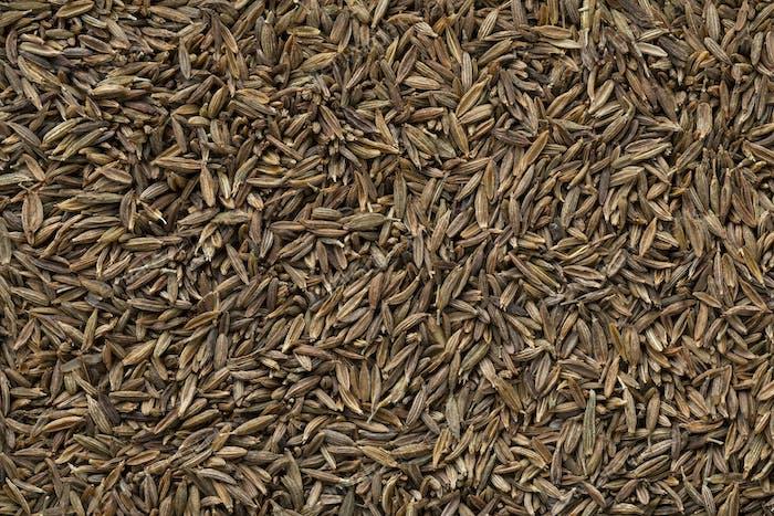 Dried cumin seed close up full frame