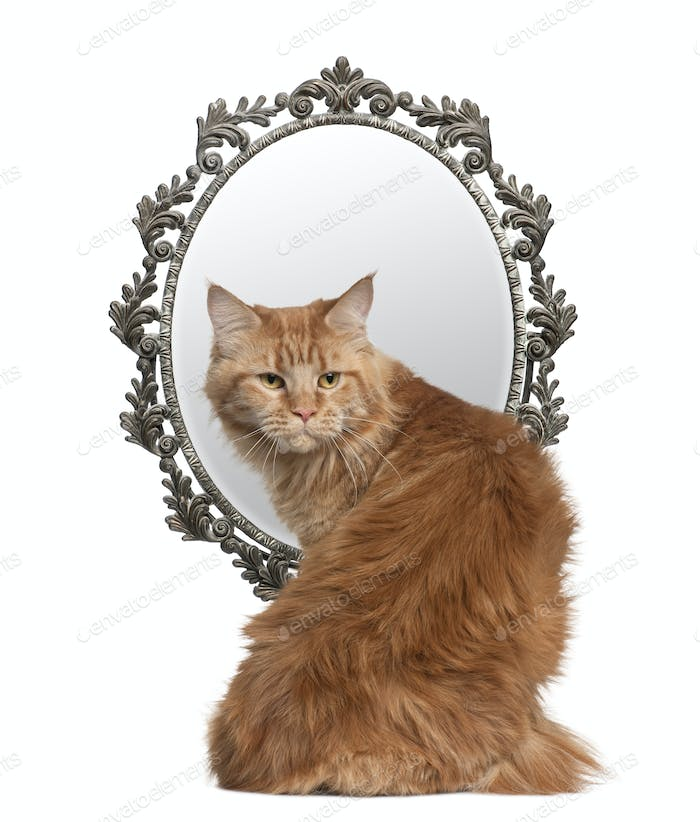 Cat looking back with a mirror in background in front of white background