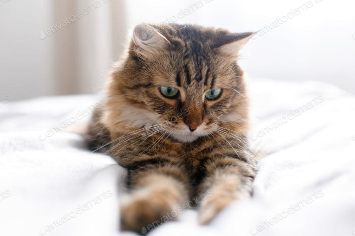 Cute cat with green eyes