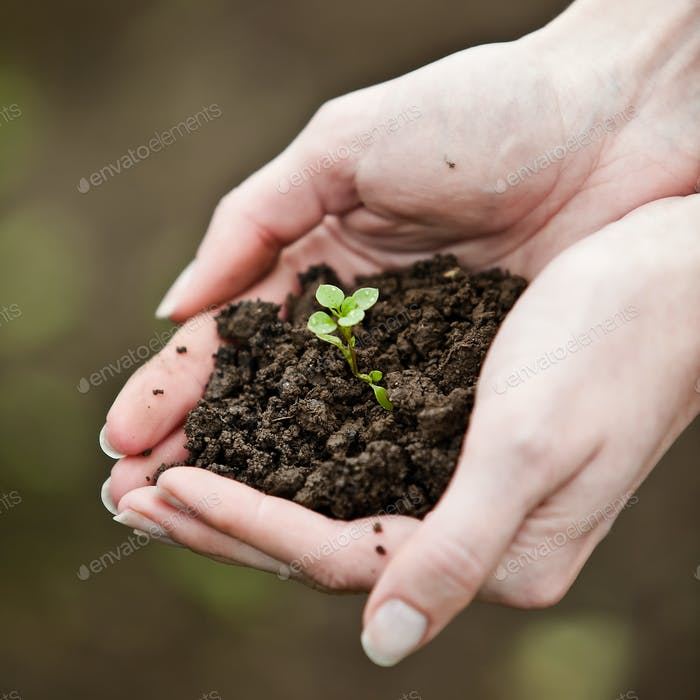 Hand holding a fresh young plant. Symbol of new life and environ