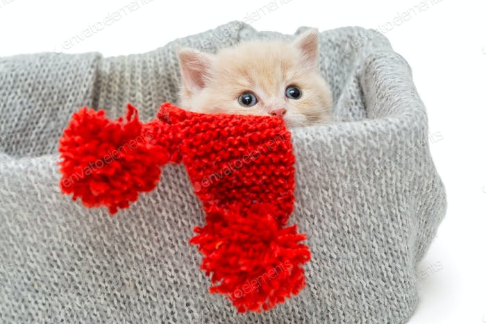 Little kitten in box with knitted scarf