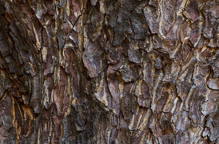 The texture of the tree bark