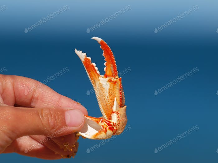 a crab claw with blue background