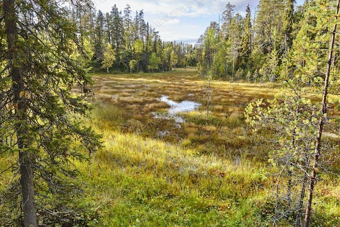 Bosque y lago de Finlandia en el sendero Pieni Karhunkierros. Temporada de otoño
