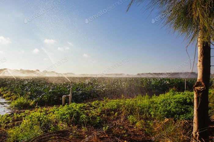 Crop Sprayers in Action in Australia