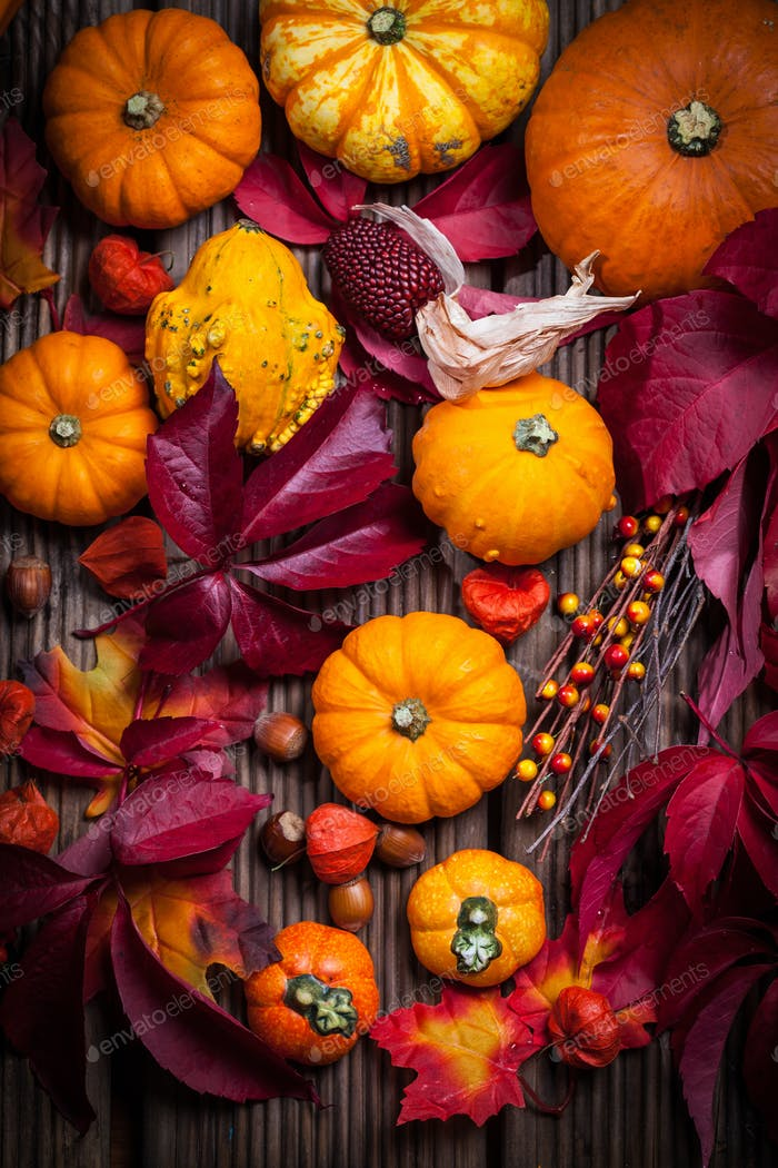 Pumpkins and Thanksgiving