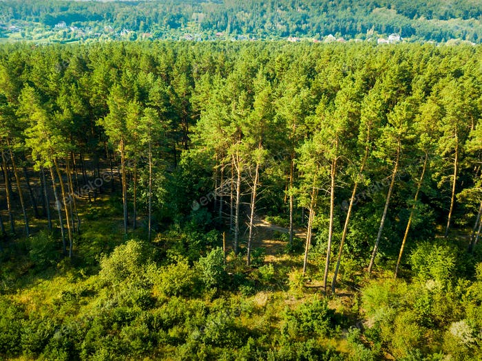Aerial view from the drone of a landscape view of the coniferous forest and the village in the