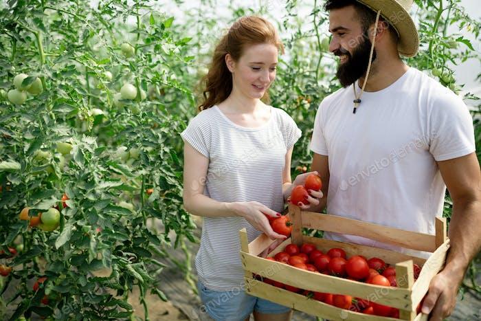 Frau und Mann in Tomatenpflanze im Treibhaus