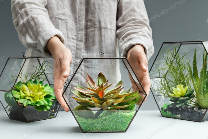 Florist showing florariums with succulent plants on table