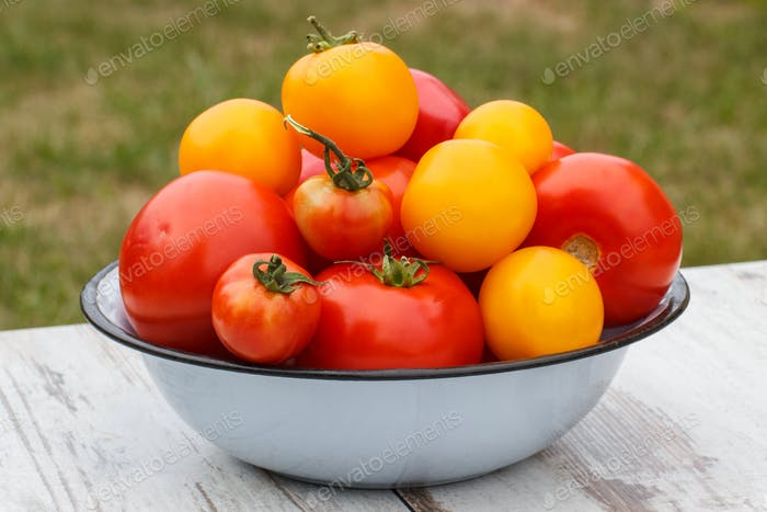 Tomatoes in bowl in garden on sunny day