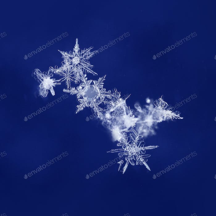 Snow crystals on dark blue background