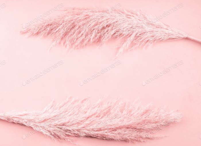 Pale pink background with pampas grass