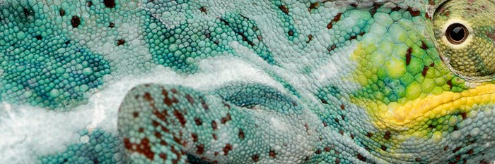 close-up on a colorful reptile skin