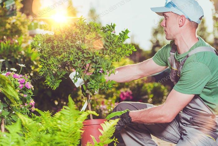 New Garden Plants Buying