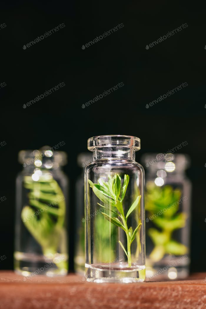 Homeopathic Vegetable Oils. Concept of Organic, Bio Cosmetics and Food Additives