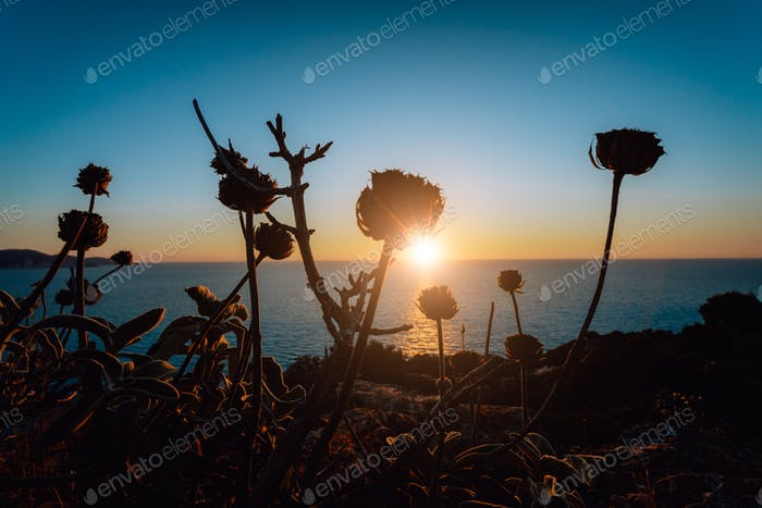 Magic golden sunset over sea horizon. Dry plants in forground