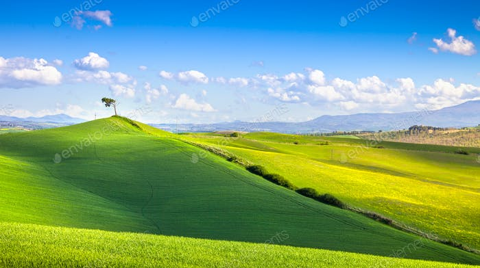 Tuscany panorama, rolling hills, fields, meadow and lonely tree.