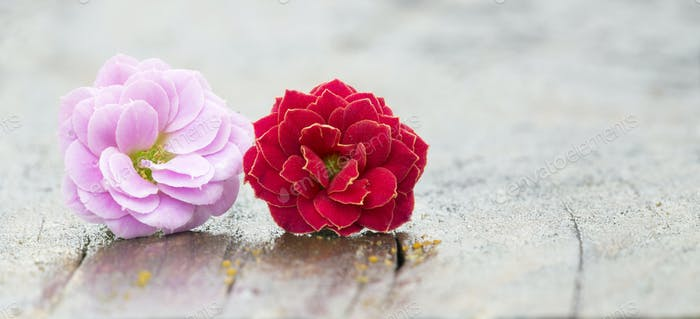 Pink and red flowers on wooden background