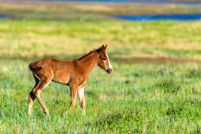 Young foal in green field