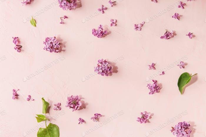 Flores lilas sobre rosa