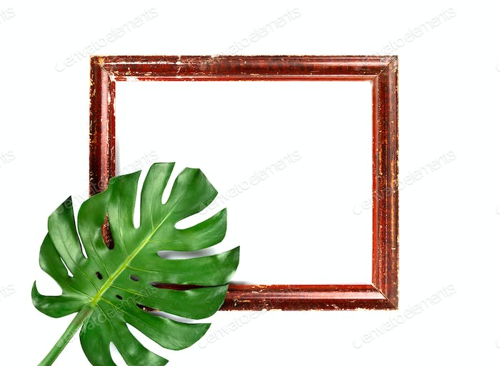 Green leaves Monstera .Photo frame composition.