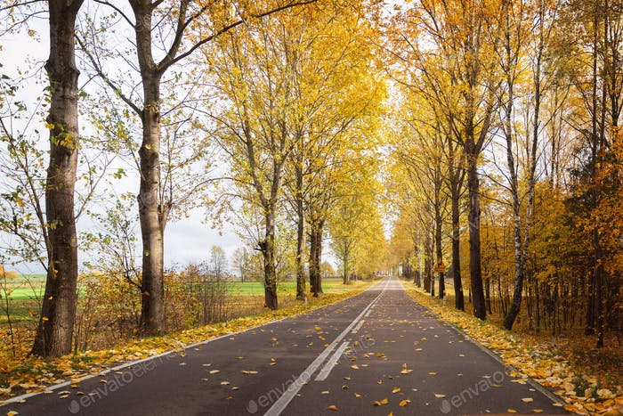 Autumnal colorful road