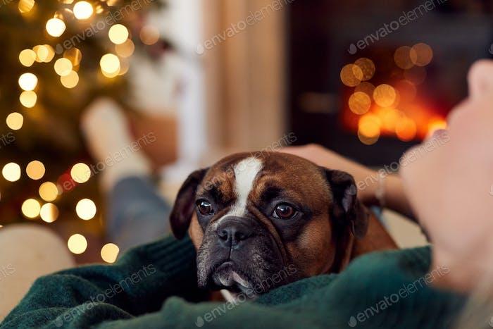 Woman At Home Cuddling Pet French Bulldog Dog By Fire At Christmas