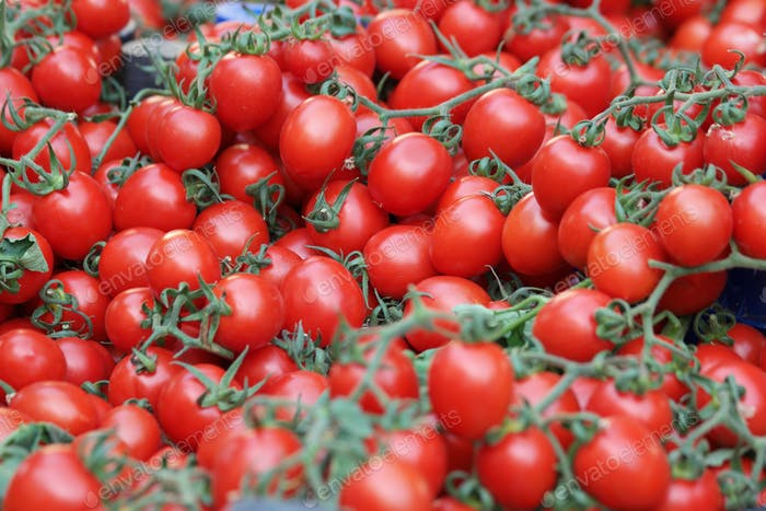 Pile of fresh ripe tomatoes with green vines.