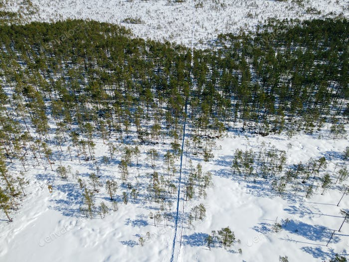 Aerial view to winter bog and forest