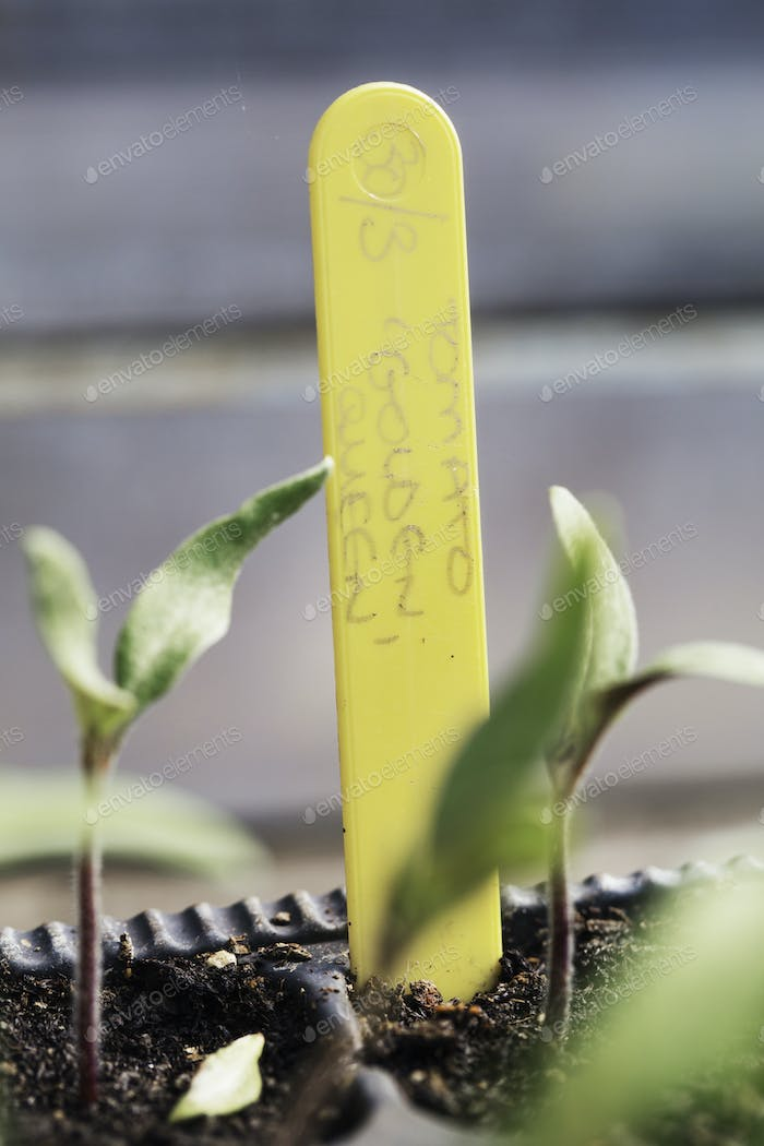 A plant label in a small pot with seedlings.