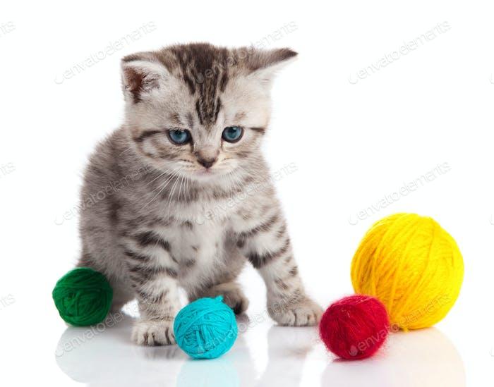 kitten with balls of threads. little kitten on white background.