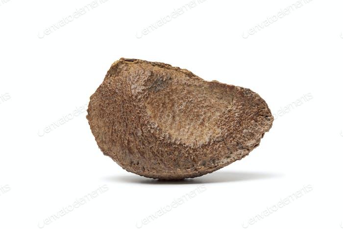 Whole single fresh Brazil nut