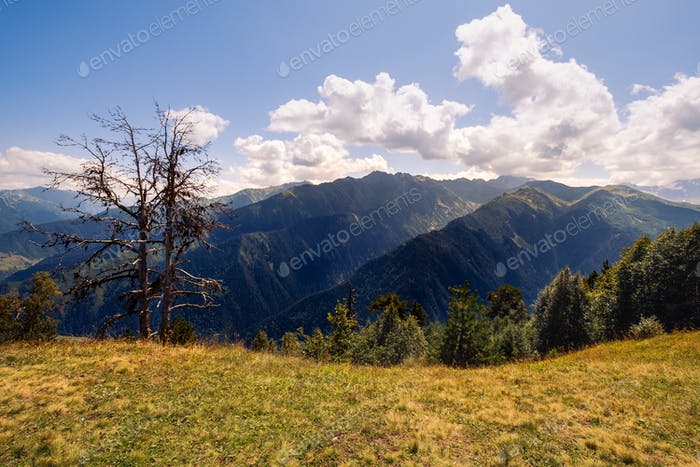 Landscape view of Svaneti mountains and dry tree, Caucasus, Georgia