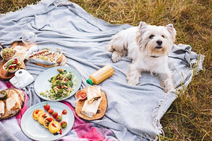 Close up cute little dog lying on picnic blanket with variety of