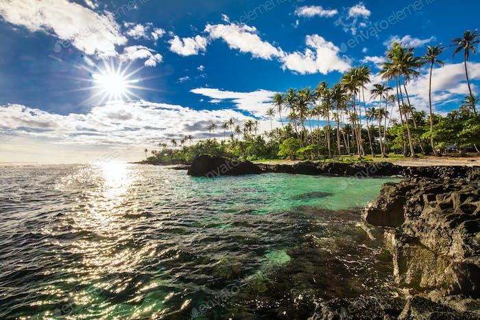 Coconut palm trees on the beach during the sunrise on Upolu, Sam