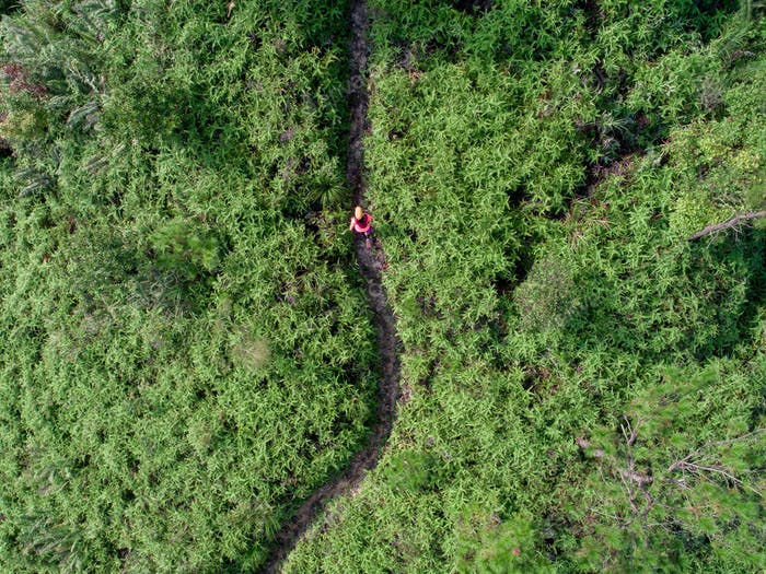 Aerial view of woman trail runner running on forest