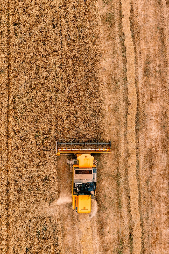 Aerial view of the combine harvester agriculture machine working on ripe wheat field.